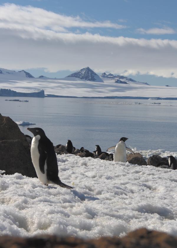 penguins3