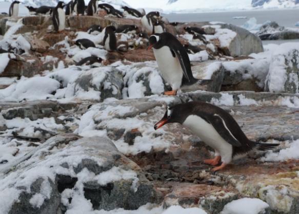 penguinsrooker2y
