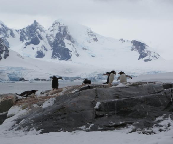 penguinsrookery