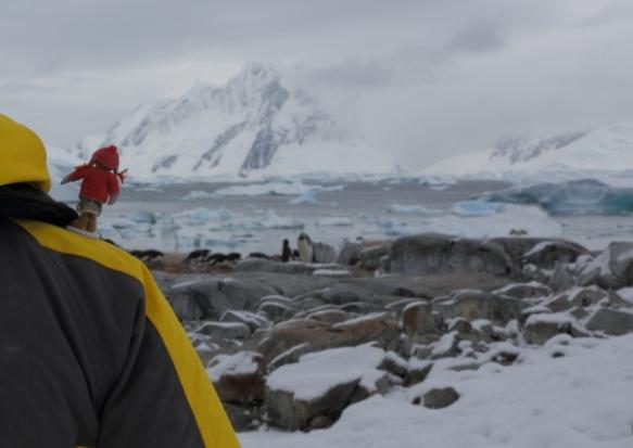penguinsrookery4