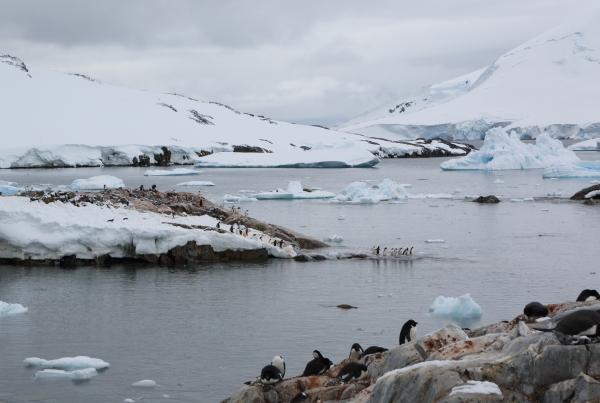 penguinsrookery5