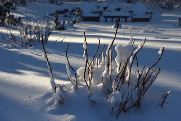 snowfeb13b