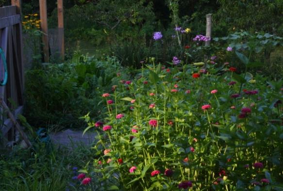 garden2013a