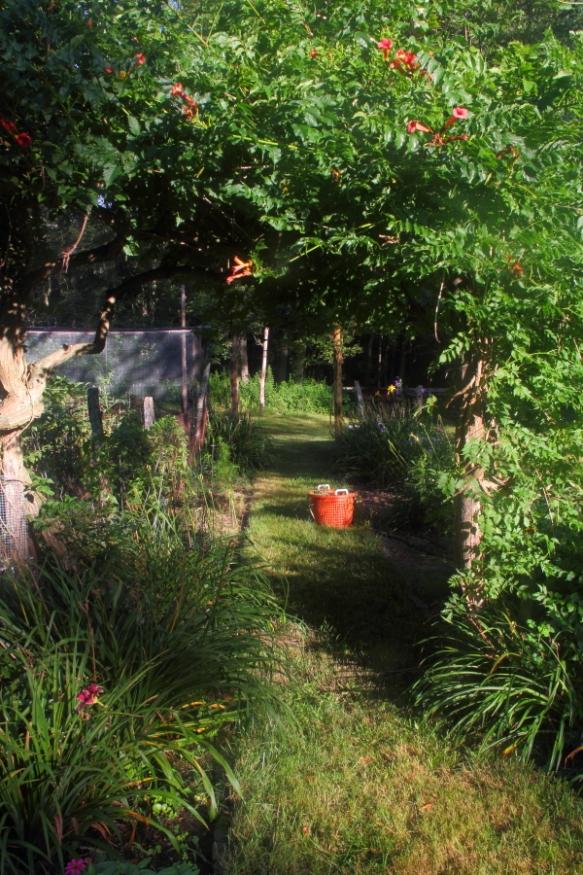 my garden, Falmouth, MA