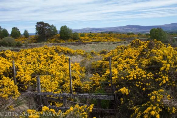Scotlandlandscape-1-6